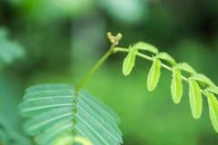 Groene bladinstallatie in tropisch land Royalty-vrije Stock Afbeeldingen