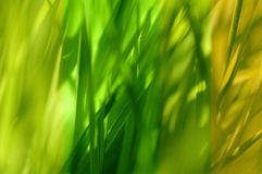 Groene bladinzameling Royalty-vrije Stock Fotografie