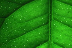 Groene bladmacro Stock Afbeeldingen