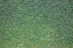 Groene bladmuur voor achtergrond Stock Foto's
