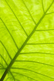 Groene bladoppervlakte Royalty-vrije Stock Afbeeldingen