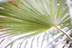 Groene bladpalmen in sneeuw stock foto's