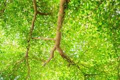 Groene bladtak voor natuurlijke achtergrond Stock Afbeeldingen