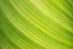 Groene bladtextuur Stock Afbeelding