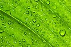 Groene bladtextuur Stock Foto's