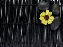 Groene bloem met zenstenen op zwarte achtergrond stock foto
