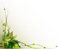 Groene bloem vectorachtergrond Stock Afbeeldingen