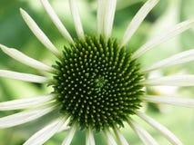Groene bloem/wit Royalty-vrije Stock Foto