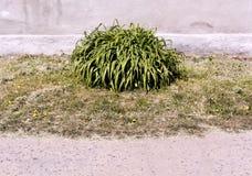 Groene bloembladeren in stedelijke voorwaarden Royalty-vrije Stock Foto's