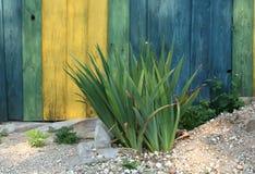 Groene bloembladeren voor kleurenomheining Royalty-vrije Stock Afbeeldingen