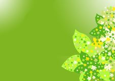 Groene bloemen Stock Foto