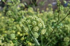 Groene bloemen Royalty-vrije Stock Foto's
