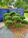 Groene bloemen dichtbij blauwe muur Stock Foto's