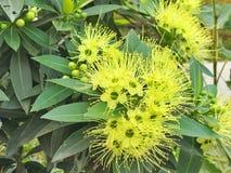 Groene bloemen met bladeren Royalty-vrije Stock Afbeelding