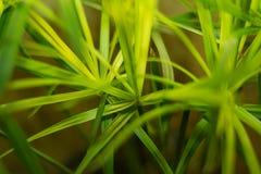 Groene bloemtextuur Stock Foto