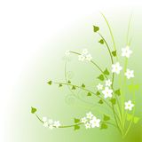 Groene bloesems Royalty-vrije Stock Foto