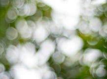 Groene bokeh abstracte achtergrond Stock Afbeelding