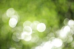 Groene bokeh van installatie Stock Afbeelding