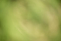 Groene bokehachtergrond Royalty-vrije Stock Fotografie