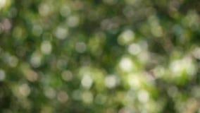 Groene bokehachtergrond wijd stock footage