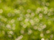 Groene bokehlichten in zonnige dag Stock Foto