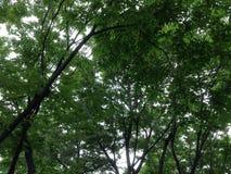 Groene Bomen stock foto's