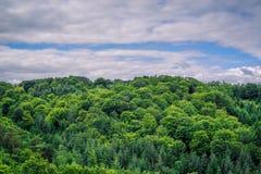 Groene bomen in bewolkt weer stock afbeelding