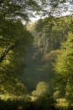 Groene bomen in bos Royalty-vrije Stock Foto's