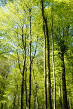 Groene bomen in de lente Stock Afbeelding