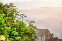 Groene bomen die bovenop rots, Avatar Rotsen groeien Gestemd beeld stock foto's