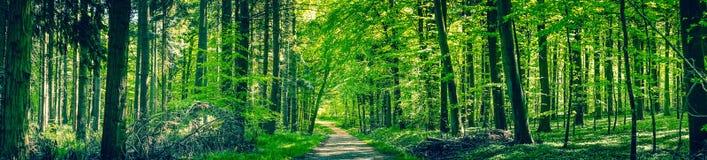 Groene bomen door een bosweg stock afbeeldingen