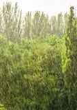 groene bomen in een regen Royalty-vrije Stock Afbeelding