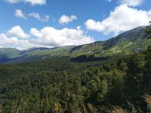Groene bomen en berg royalty-vrije stock foto's