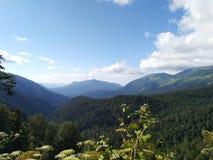 Groene bomen en berg stock foto