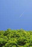 Groene bomen en blauwe hemel met vliegtuig bij de achtergrond Royalty-vrije Stock Foto