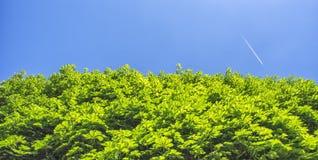 Groene bomen en blauwe hemel met vliegtuig bij de achtergrond Stock Afbeeldingen