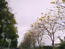 Groene bomen en gele bloemen royalty-vrije stock foto's