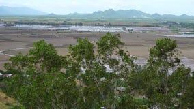 Groene bomen en padievelden stock footage