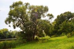 Groene bomen en struiken dichtbij de rivier in de zomer stock foto