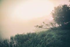 groene bomen en struiken dichtbij meer bij nevelige ochtend, stock afbeelding