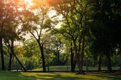 Groene Bomen in het aardpark Royalty-vrije Stock Foto