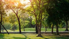Groene Bomen in het aardpark Stock Foto