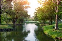 Groene Bomen in het aardpark Stock Foto's