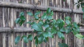 Groene bomen met bamboeomheining stock video