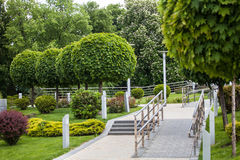 groene bomen met een ronde vorm Stock Foto's