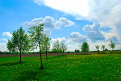 Groene bomen op een bloemweide, heldere dag, de Lente, Tsjechische Republiek royalty-vrije stock afbeeldingen