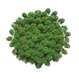 Groene bomen op een kleine planeet royalty-vrije illustratie
