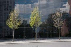 Groene bomen op zwarte Royalty-vrije Stock Afbeelding
