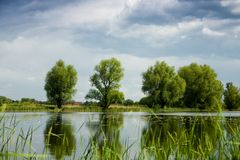 Groene bomen over meer Stock Foto