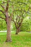 Groene bomen in park Royalty-vrije Stock Foto